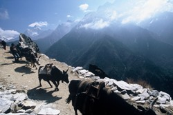 Trek Everest Base Camp Picture 2