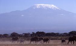Kilimanjaro Classic Machame Trek Picture 2