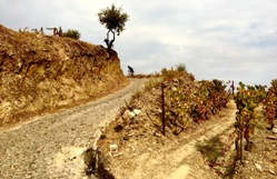 Ride the Douro Valley Picture 3